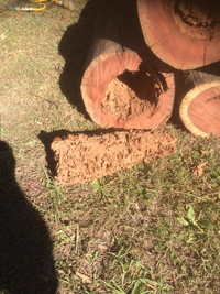 Termite infested stumps sml